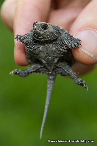 turtle_27917