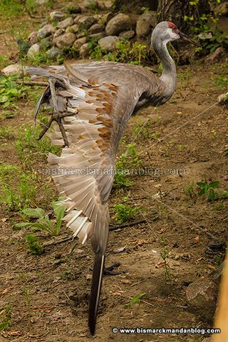 wings_4307