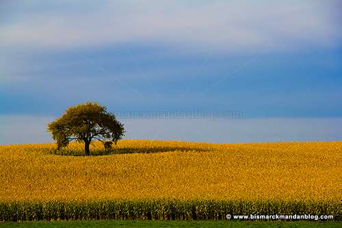lonely_tree_0033