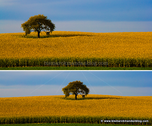 lonely_tree_crops_0033