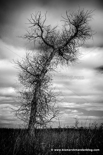 spooky_tree_28560