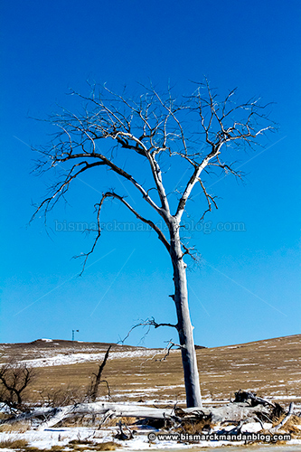 winter_tree_28795