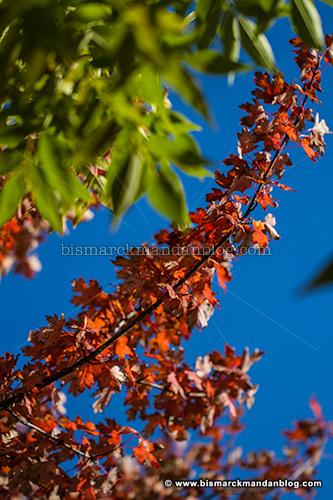 fall_foliage_31973